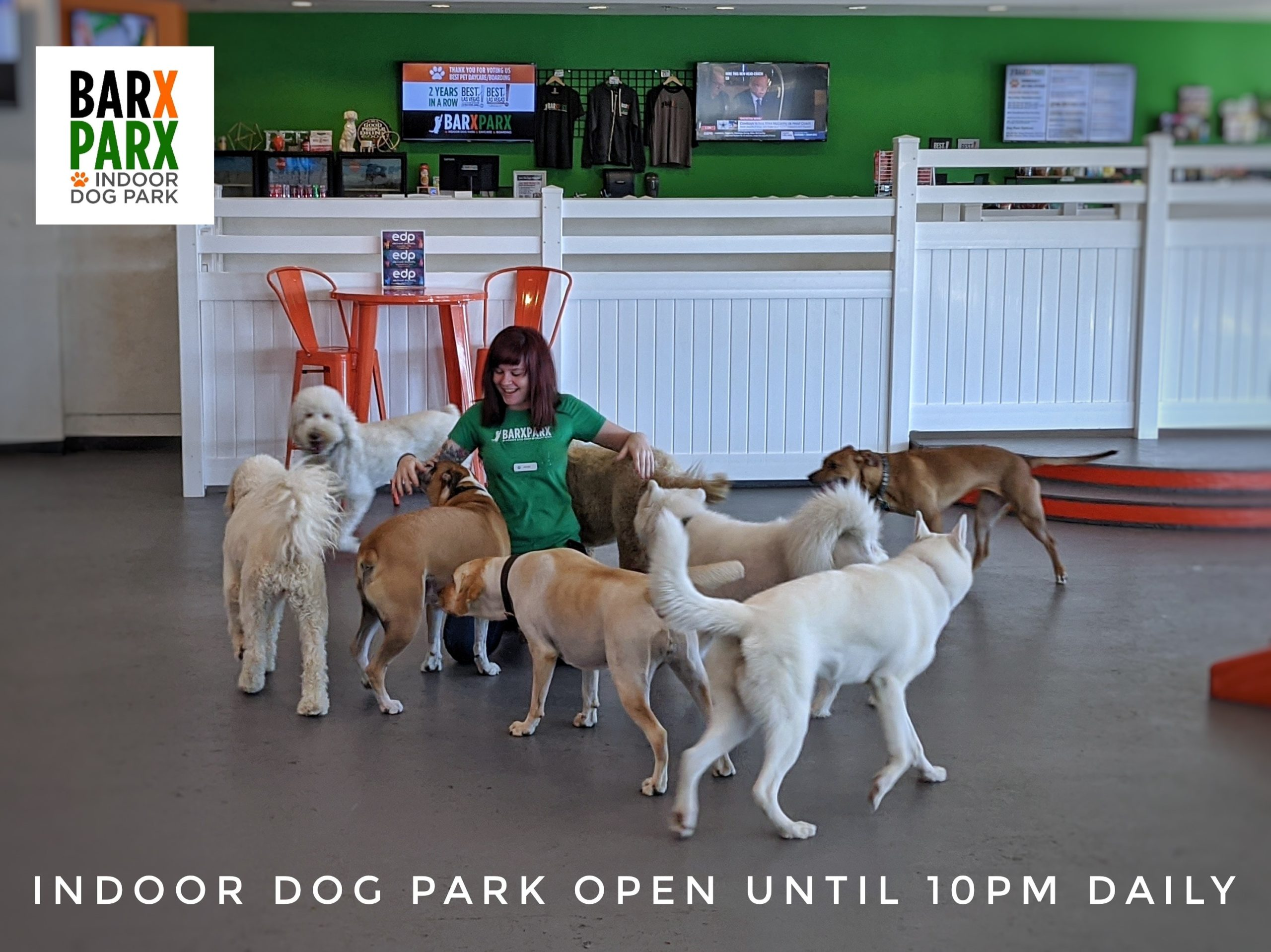 Indoor Dog Park